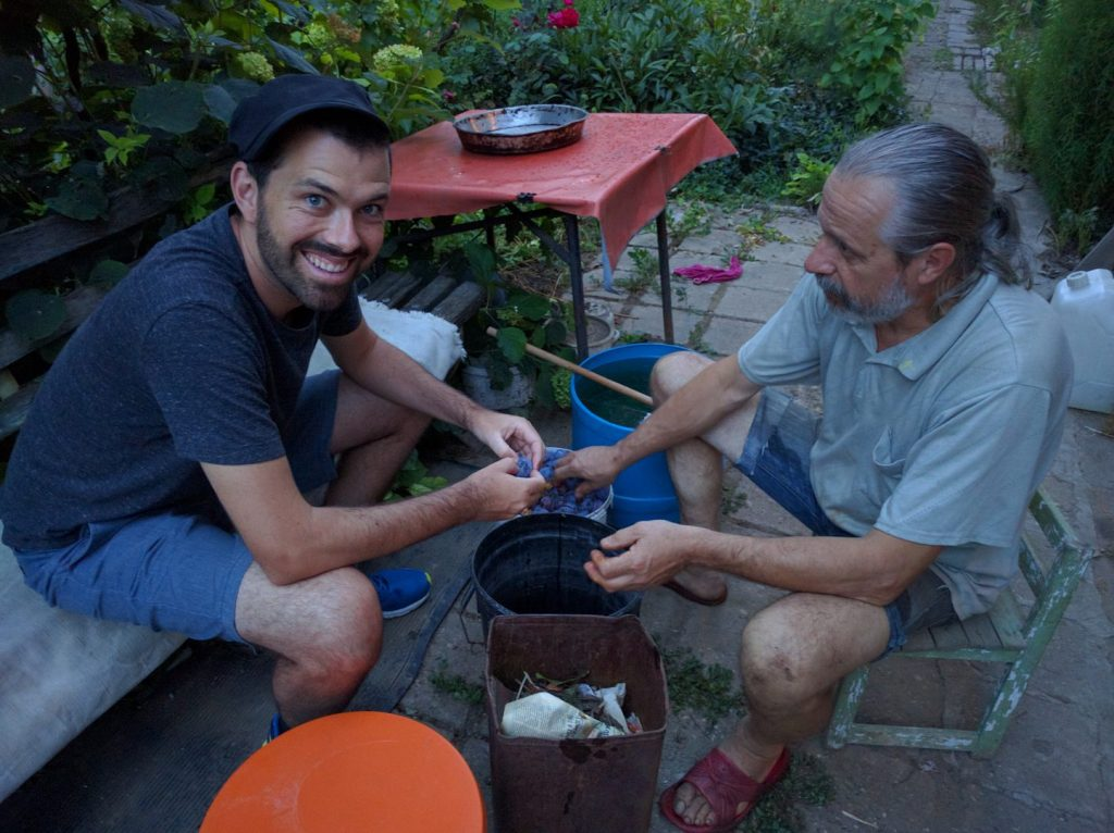 Pitting plums to add to the grape pomace